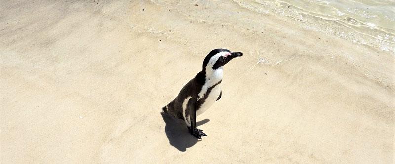 Imagen de marca pinguino